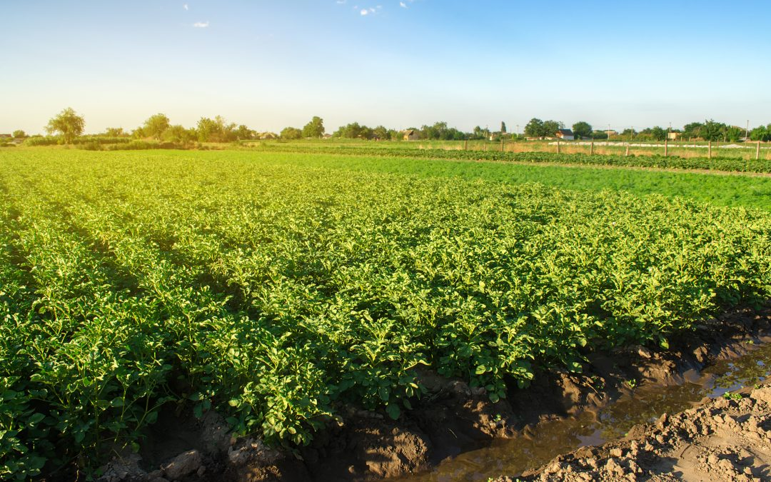 Corteva and Symborg Agreement Expands Farmer Access to Microbe-based Nitrogen Fixation Product